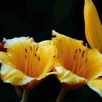 Flowers :: Gene Brumer