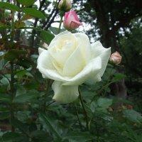 Цветы :: Anton Сараев