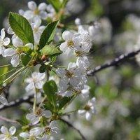 Весна в цвету. :: Андрей