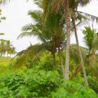 Балийские джунгли :: Дмитрий Боргер
