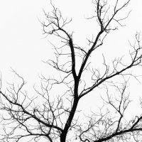 Зимний пейзаж :: Anna Grigoryan