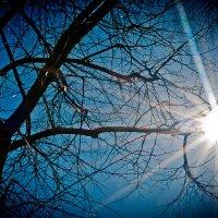 солнце :: Максим Царев