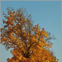 Золотая осень чудной красоты :: Татьяна Губина
