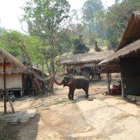 Слоник в деревне :: svk