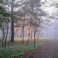парк в тумане :: Валентина Береснева
