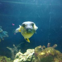 рыба с зубами, как у человека. :: Василиса Подгорнова