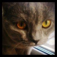мой кавайный и няшный котЭ (=^^=) :: Василиса Подгорнова