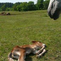 Новорожденный :: Анастасия Макрушина