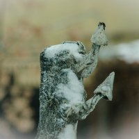 Зимние грибочки)Измаиловский парк, Санкт-Петербург :: Евгений Киреев