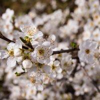 Весна :: LENUR Djalalov