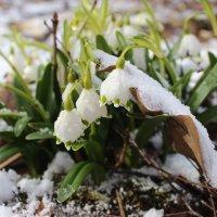 Под снегом :: Mariya laimite