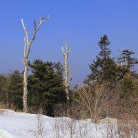 В зимнем лесу... :: Нина Борисова