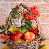 Осенние краски :: Татьяна Конькова