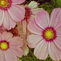 Неизвестные цветы :: Валентина Потулова