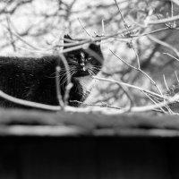 Кошка :: Olga Brehm