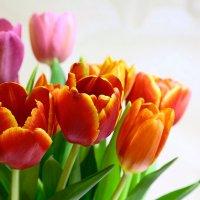 Цветы завяли, осталось фото..! :: Анна Уварова