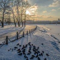 Голуби на снегу :: Valeriy Piterskiy