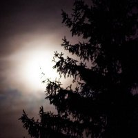 Лунная ночь :: Игорь Халявка