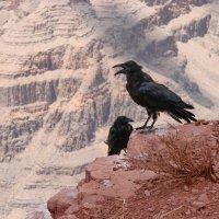 вороны Великого каньона :: Ingwar