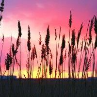 пылающий закат :: Виктор Масальский
