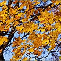 Знаешь, как пахнут осенние листья :: Татьяна Губина