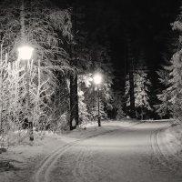 Вечерняя лыжня :: vladimir