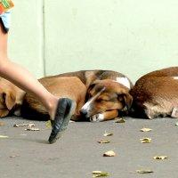 Мы спим, а красота проходит :: Генрих Сидоренко