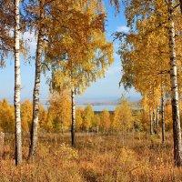 Золотая осень. :: Наталья Юрова