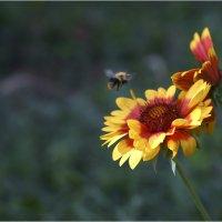 пчелка. осень :: yameug _
