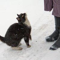 Кошки Старой Ладоги :: Владимир Ховрашов