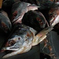 Натюрморт с рыбой :: Nn semonov_nn