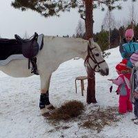 Дети и белая лошадь :: Сергей Комков