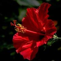 Аленький цветочек :: Жанна Мальцева