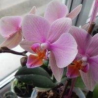 Мои цветы :: Мария Мазурова