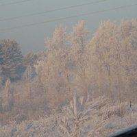 туман замерз :: Елена Романова