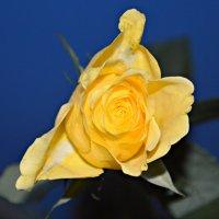 желто-синие цвета :: Маry ...