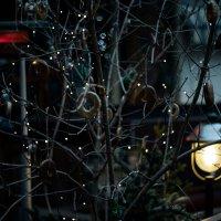 рождественское настроение :: Виталий Миронюк