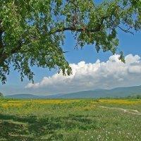Под тенью дерева :: Александр Ваюш
