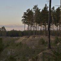 Вечер в лесу :: Yuri Silin
