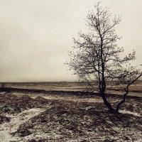 Одинокое дерево на берегу Финского залива :: Даниил Кафтырев
