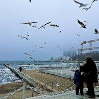 море, чайки, туман... :: Александр Корчемный