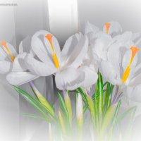 Знаки Весны! :: Дарья Довгопольская