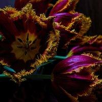 Тюльпаны к дню рождения :: Лидия Цапко