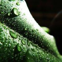 Капли дождя :: Дмитрий Соломаха