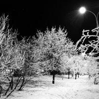 Зимнее :: Анатолий Бастунский