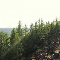 Лето с видом на Н.Тунгуску :: Оля Староворцева