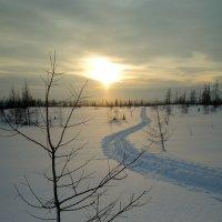 Закат в тундре :: Сергей Карцев