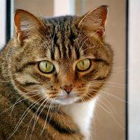 Мой ласковый и нежный  зверь... :: Юрий Савинский