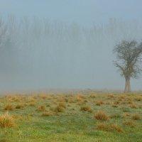 Утро туманное... :: Вальтер Дюк