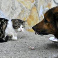 Надеюсь Вы не против ....?  - спросил пес . :: Ольга Винницкая